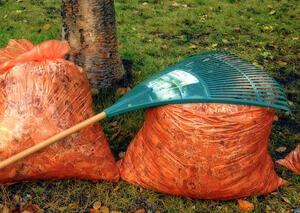 Jak przygotować ogród do zimy | kielkismaku.pl